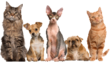 pet safe Pest Control Melbourne
