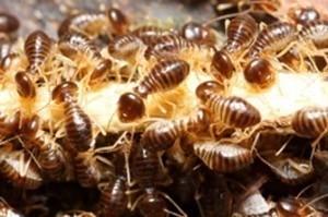 Termite Treatment Melbourne